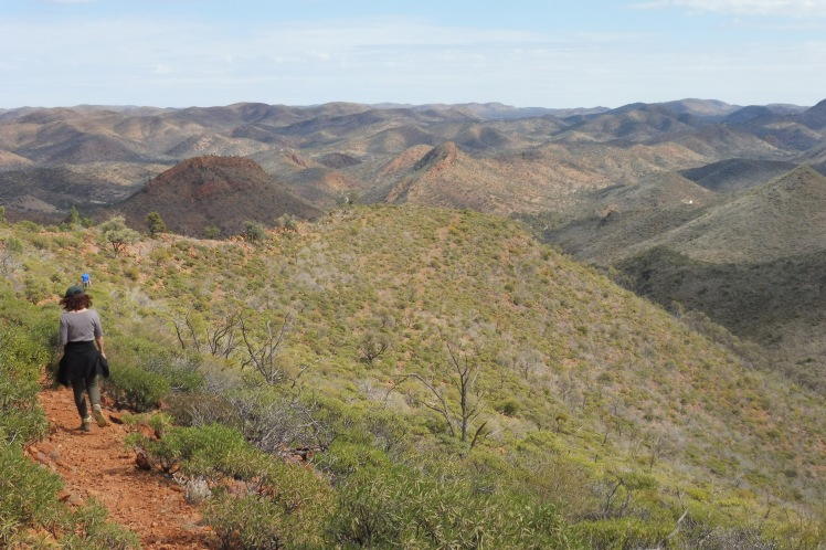 Walking the Acacia Ridge Arkaroola