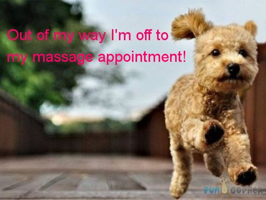 Funny-Animals-Out-of-my-way-I-m-off-to-my-massage-appointment