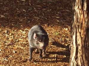 Tasmania (June 2009) 326