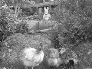 ChicksNovember2012 064