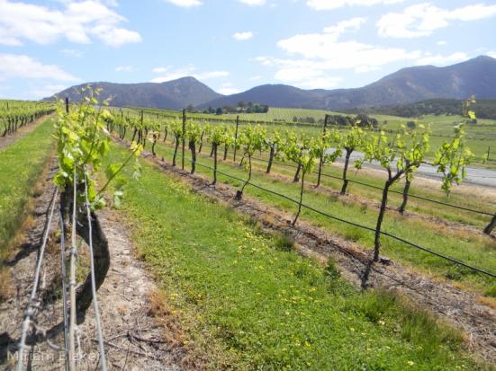 Landscape wine (800x600)