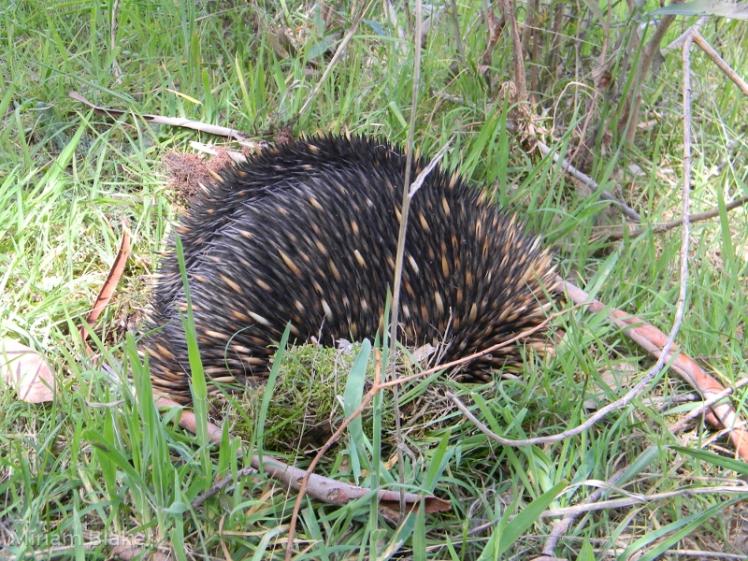prickly fella (800x600)