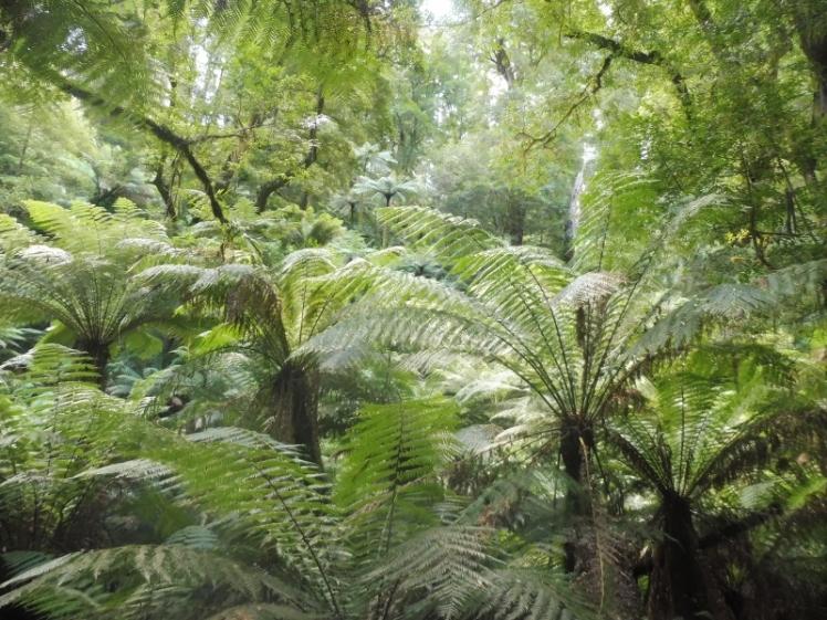 lush rainforest (800x600)