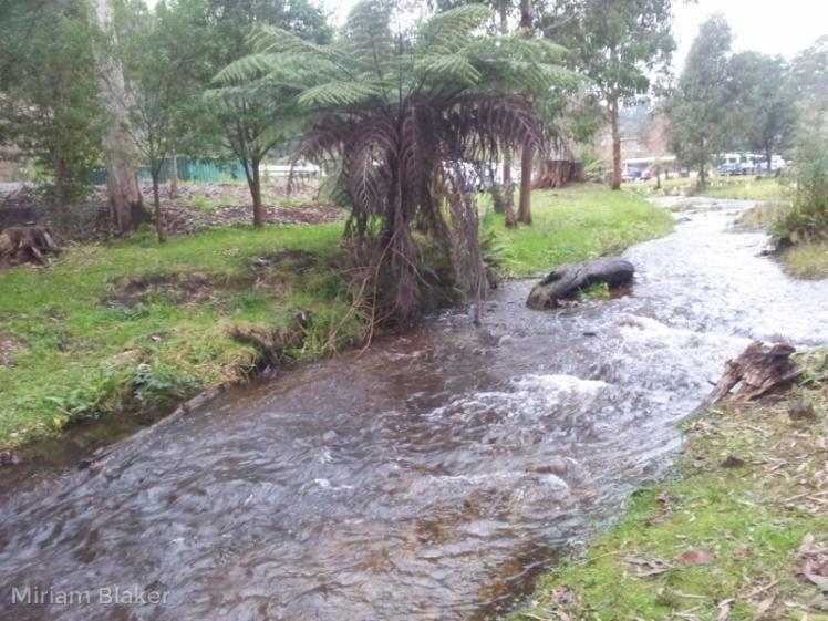 Creek (800x600)