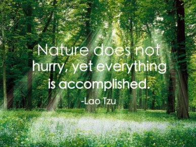 nature-does-not-hurry-yet-everything-is-accomplished