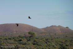 Eagles (800x533)