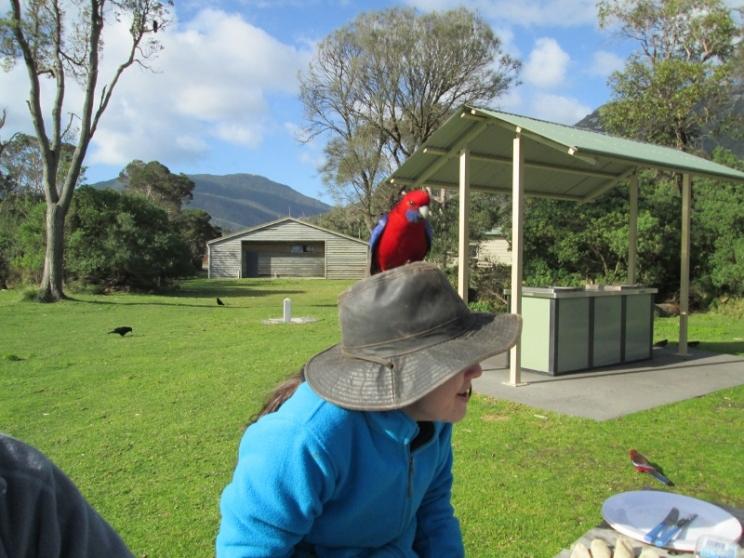 On Tashs hat (800x600)