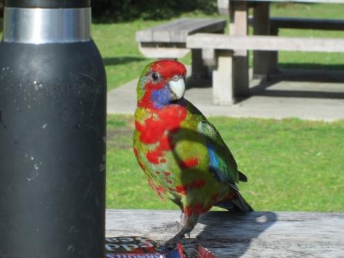 A colourful camper