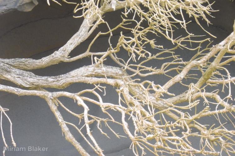 Dried branch (800x533)