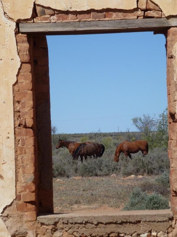 horse frames in Silverton (600x800)