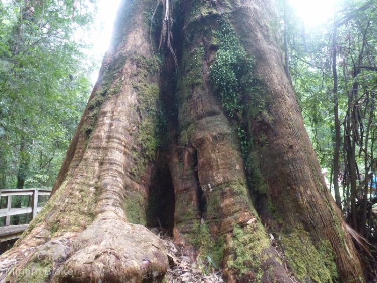 ada-tree-800x600