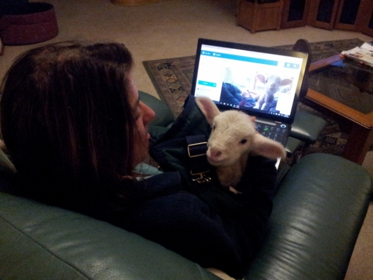 Blogging about Lamby (800x600)