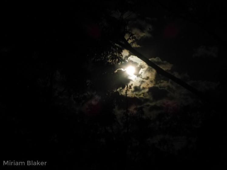full-moon2-800x600