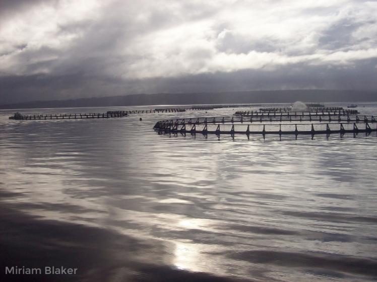grey-fishery-tassie-800x599