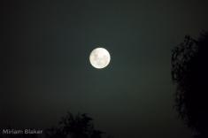 moon4-800x533