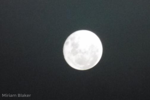 moonlarge-800x533