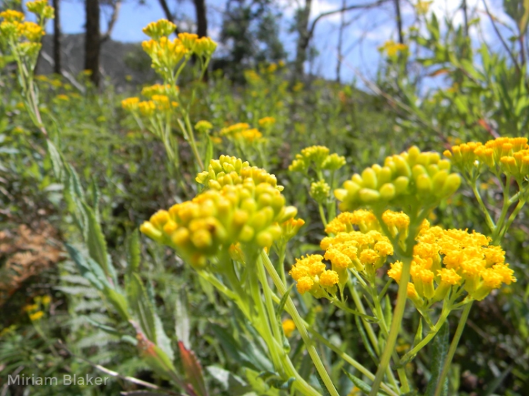 yellow-flowers-at-mt-cole-state-park-800x600