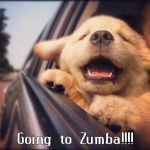zumba dog