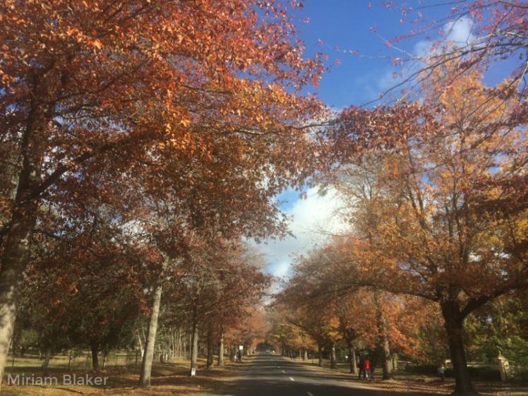 Macedon in Autumn (800x600)