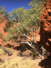 Walking the Olgas (600x800)