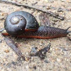 Mr slug crossed our path