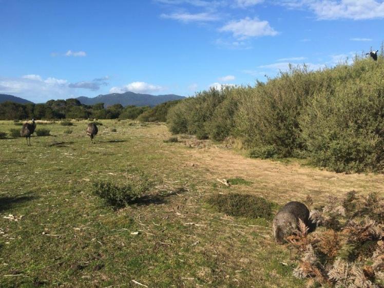 An Australian wildlife encounter