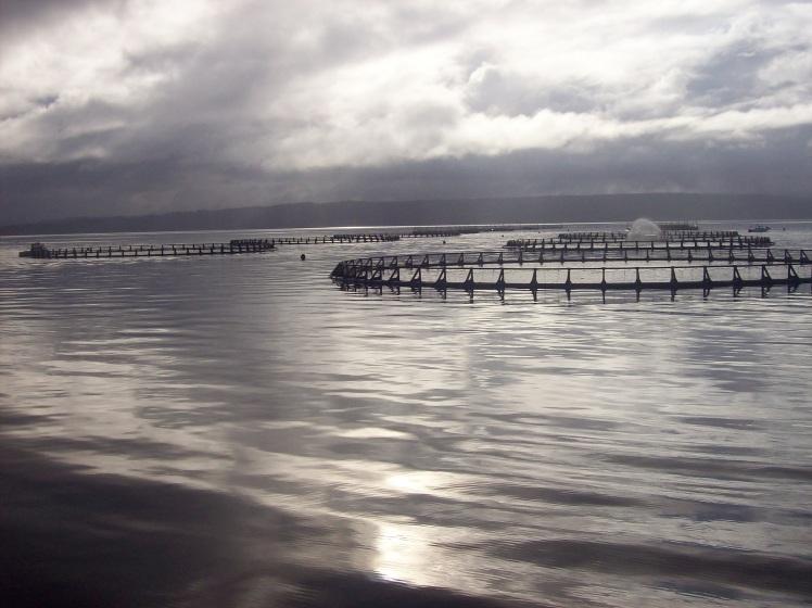 Tasmania (June 2009) 211
