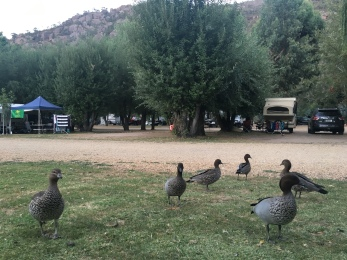Drinks with the ducks!