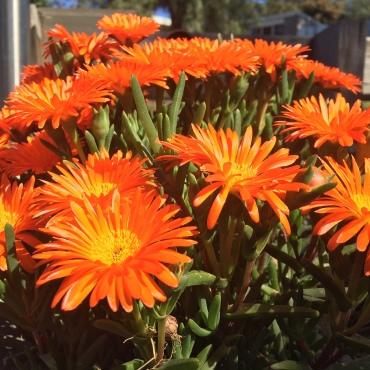 A burst of orange bouquet