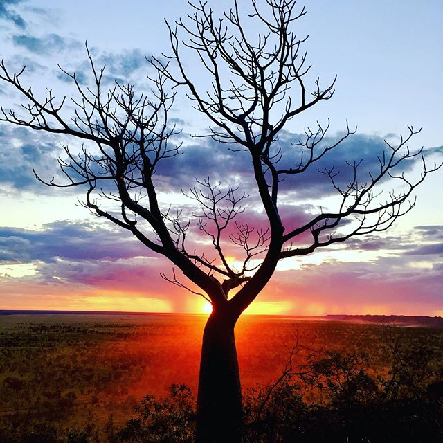 Outback tree and sunset