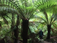Amid giants of the rainforest